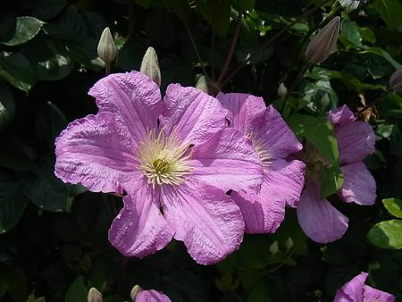 花菜ガーデン_a0223650_21502624.jpg
