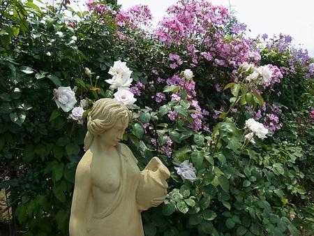 花菜ガーデン_a0223650_21514823.jpg