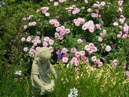 花菜ガーデン_a0223650_21522689.jpg