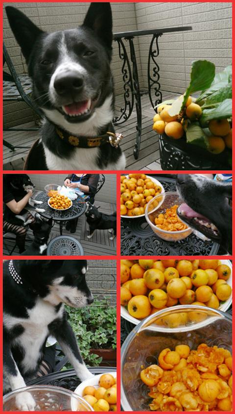今年もビワは大豊作。「飾ってよし、食べてよし」の贈り物。_e0236072_20103928.jpg