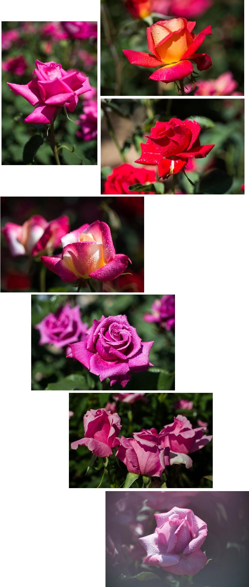 f0093285_15143181.jpg