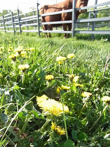 フジの花の季節です。_f0236291_848612.jpg