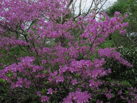 高峯渓谷が花盛り_e0120896_6433576.jpg