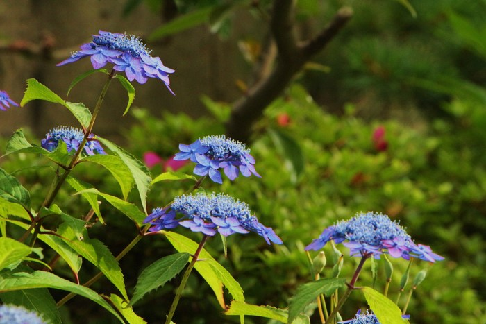 初夏 庭の花だより_d0150720_752698.jpg