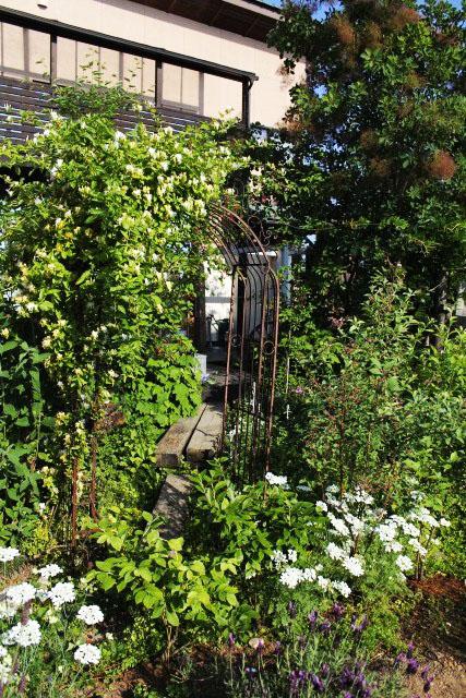 緑が濃くなる庭_b0132338_8204043.jpg