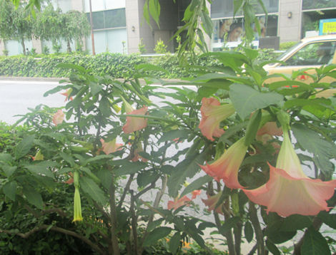 散歩を楽しく/きれいな花には毒がある?_d0183174_18522614.jpg
