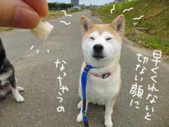 マックスとこじろうと伊佐蔵_b0057675_9281644.jpg