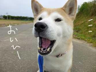 マックスとこじろうと伊佐蔵_b0057675_9282225.jpg