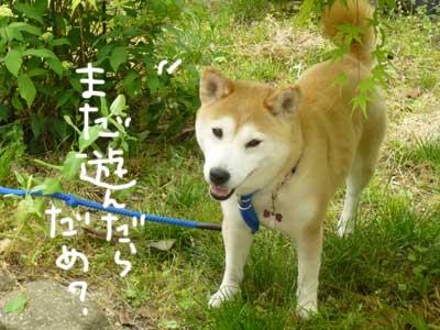 マックスとこじろうと伊佐蔵_b0057675_9285578.jpg