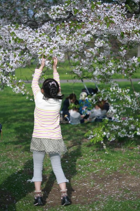 5月最終日曜日の百合が原公園の華たち 〜6〜_f0126483_23591477.jpg
