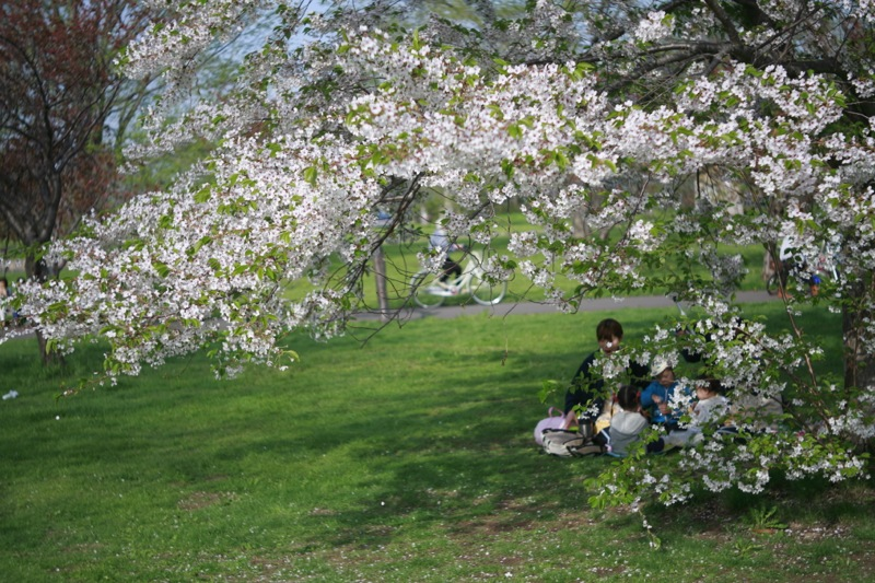 5月最終日曜日の百合が原公園の華たち 〜6〜_f0126483_2359533.jpg