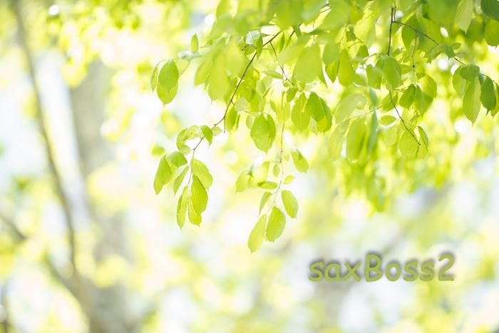 新緑の日_f0033205_180053.jpg