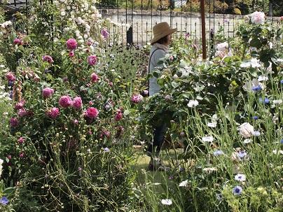 2013年 茨城のお庭その4_c0167112_21255097.jpg