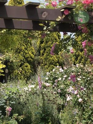 2013年 茨城のお庭その4_c0167112_21262348.jpg