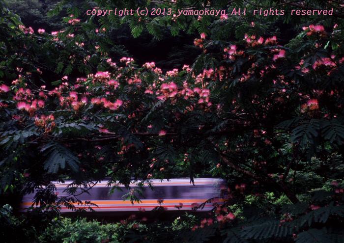 ネムノキの花咲く_d0309612_20582322.jpg