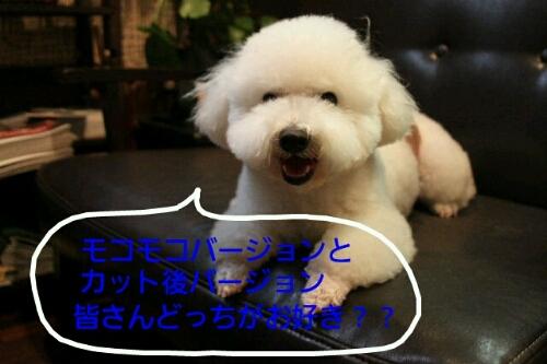 これから~♪♪_b0130018_180538.jpg