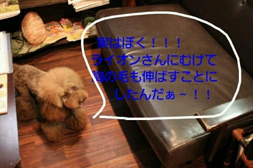 これから~♪♪_b0130018_1853693.jpg