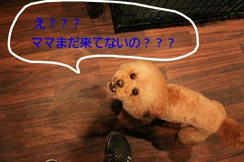 これから~♪♪_b0130018_1891148.jpg