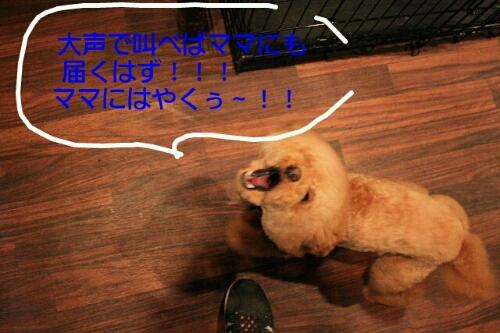 これから~♪♪_b0130018_189150.jpg