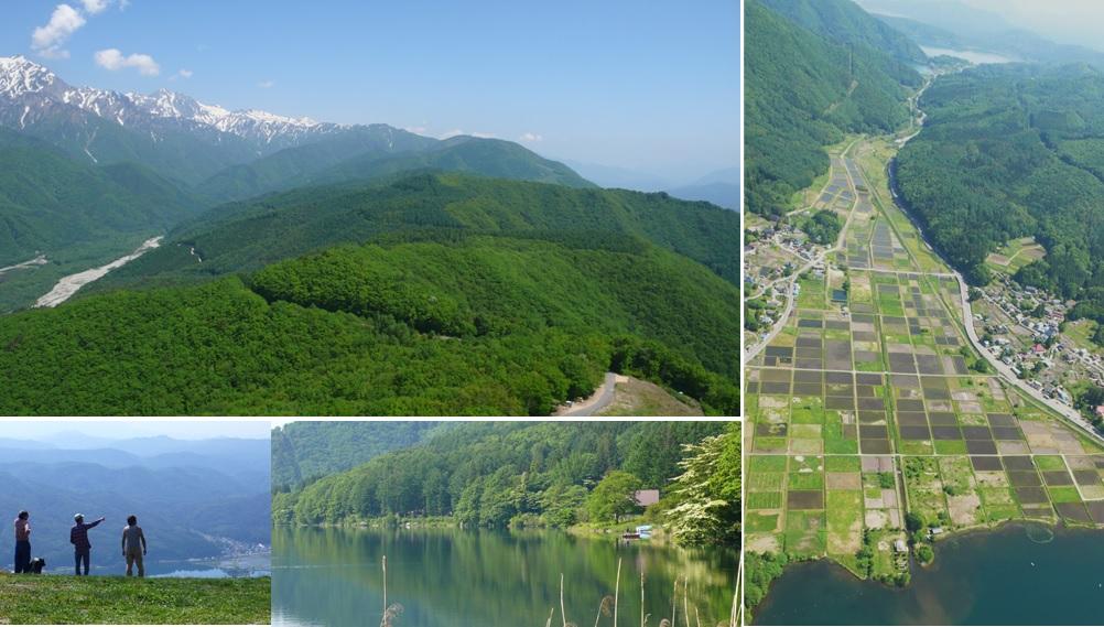 新緑の木崎湖と北アルプス_a0212730_2050673.jpg