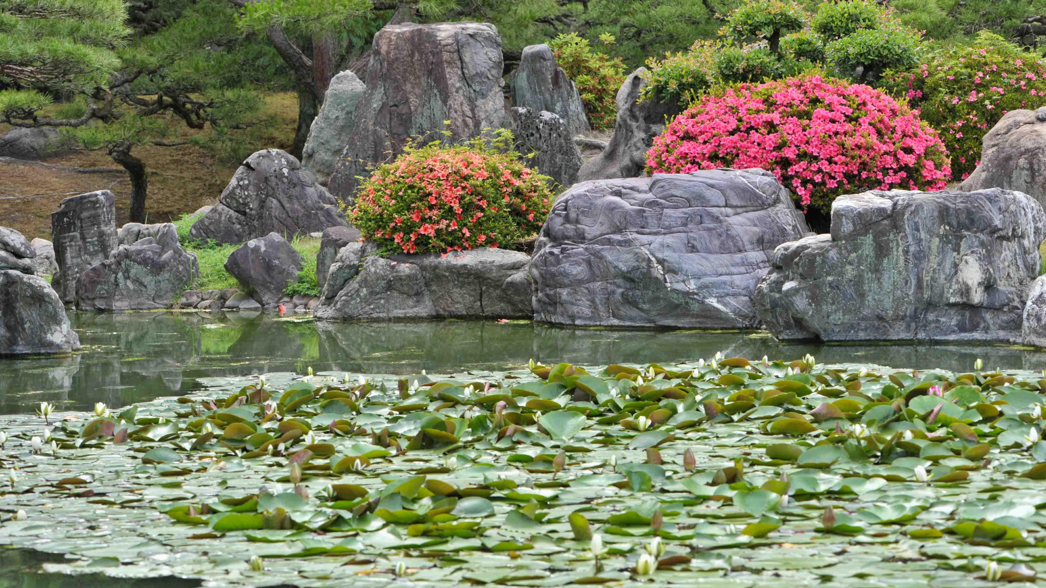 今日は 栗林公園の菖蒲  2013 0605_d0246136_20594251.jpg