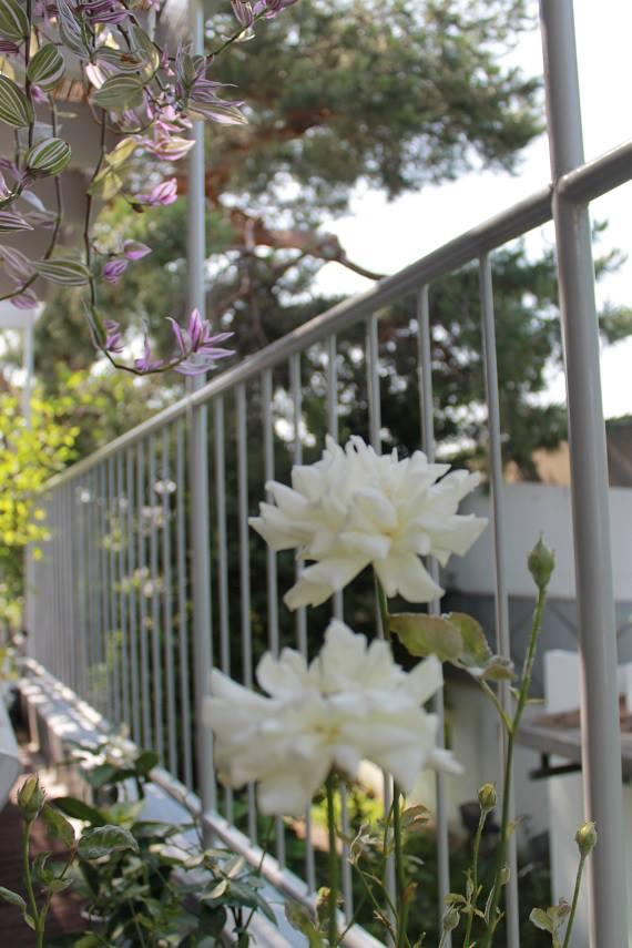 蘭香茶館の夏でも楽しめる_f0070743_0485045.jpg