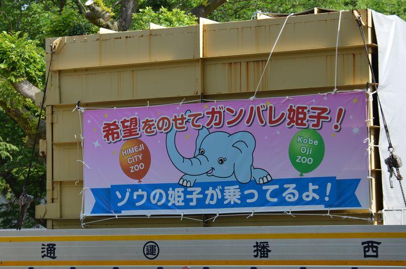 希望をのせてガンバレ姫子!_b0024758_22421811.jpg