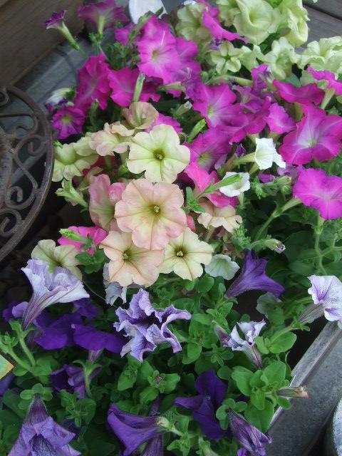 オークリーフ(六月の花たち)_f0049672_13565920.jpg