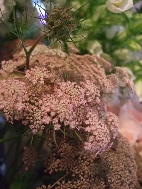 オークリーフ(六月の花たち)_f0049672_1444042.jpg