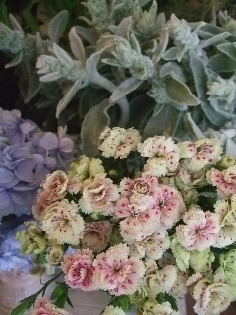 オークリーフ(六月の花たち)_f0049672_144472.jpg