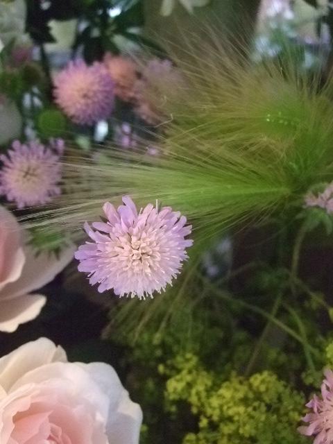 オークリーフ(六月の花たち)_f0049672_1452489.jpg