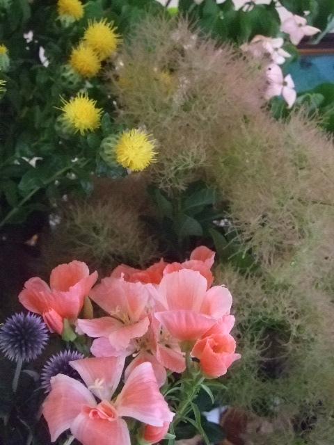 オークリーフ(六月の花たち)_f0049672_14538.jpg