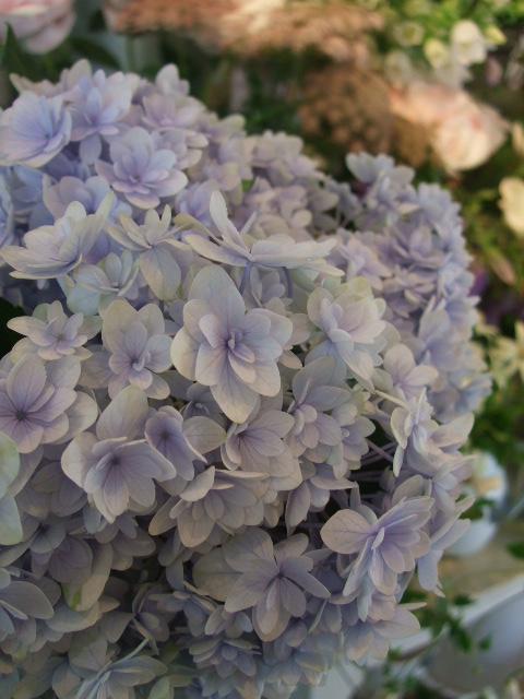 オークリーフ(六月の花たち)_f0049672_146447.jpg