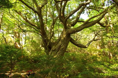 自然遺産。 「週刊ガードマン」_d0310876_9254649.jpg