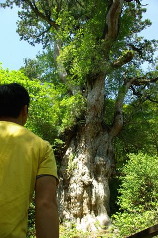 自然遺産。 「週刊ガードマン」_d0310876_931320.jpg