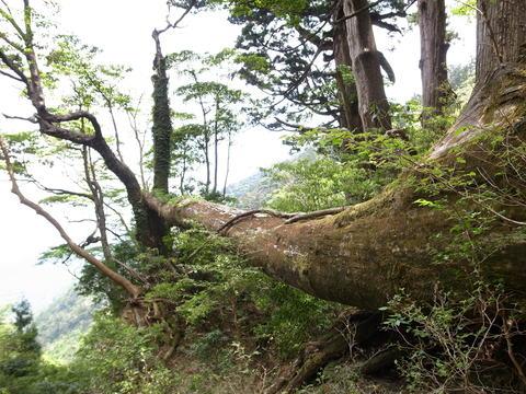 自然遺産。 「週刊ガードマン」_d0310876_9321464.jpg