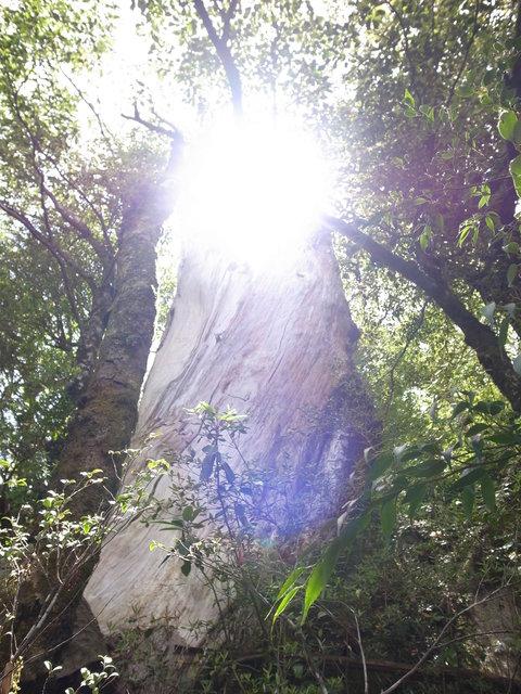 自然遺産。 「週刊ガードマン」_d0310876_9323657.jpg
