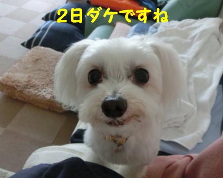b0193480_12384325.jpg