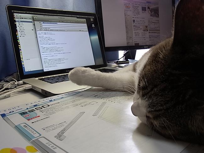 愛猫ハッピーのお腹がおかしい・・・_b0186200_0134537.jpg