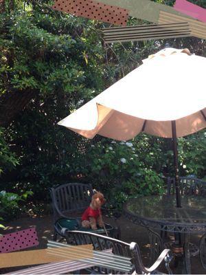 梅雨はじめ 自宅の庭にて_b0111306_9513894.jpg