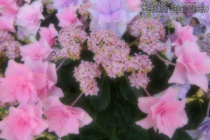 なばなの里 紫陽花満開~.。・:*:・゚`☆、。_c0067206_106359.jpg