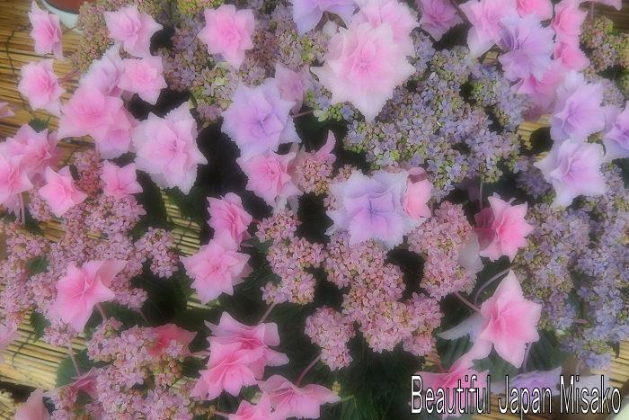 なばなの里 紫陽花満開~.。・:*:・゚`☆、。_c0067206_1064331.jpg