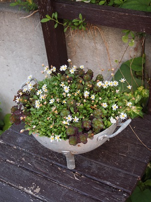 2013年 茨城のお庭その5_c0167112_22192749.jpg
