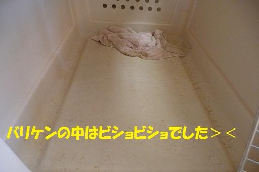 f0121712_017666.jpg