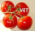 ペメトレキセド投与前にビタミンを補充することは本当に必要か?_e0156318_1730811.jpg