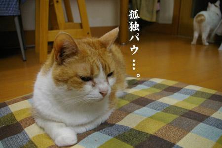 とめのマイブーム♪_a0063520_024419.jpg