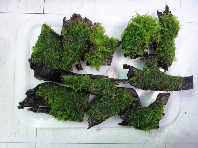 130606 海水魚・熱帯魚・水草・金魚_f0189122_13255949.jpg
