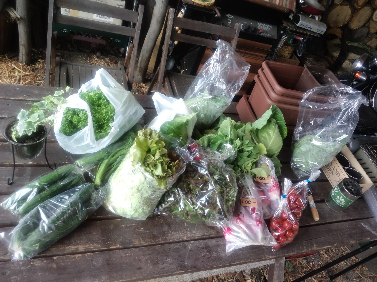 野菜無人販売_a0160770_11102429.jpg