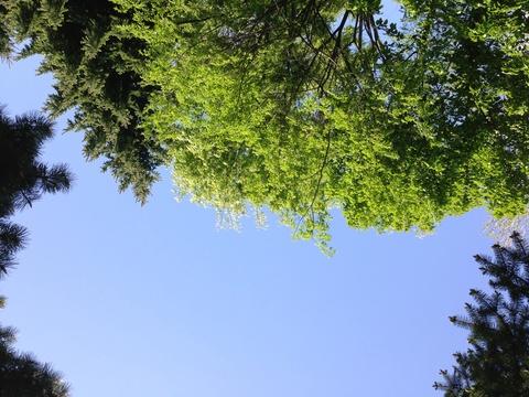 初夏のにおいと、ニセコ。_d0268070_12214363.jpg