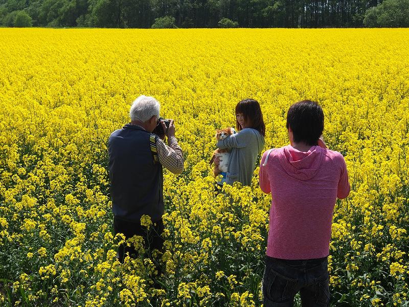 千歳郊外の菜の花畑-オリンパスOM-D-_f0138096_23411345.jpg